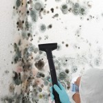 Black-Mold-Remediation-Lacey