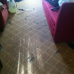 Lacey-Carpet-Clean-before