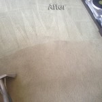 Lacey-Carpet-Cleaning-Company