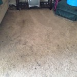 Lacey-Dirty-Carpet