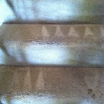 Lacey-Stairs-Carpet-Cleaning