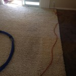 Lacey-Traffic-Area-carpet-cleaners