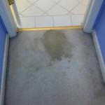 Lacey-Vomit-1-before-carpet