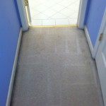 Lacey-Vomit-2-after-carpet